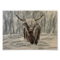 Snowy Highland Cow Poster
