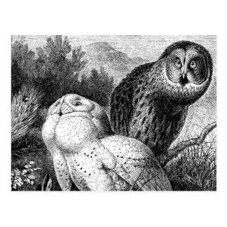 Snowy - Horned Owls Vintage Wood Engraving Postcard