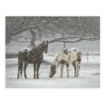 Snowy Horses Postcard
