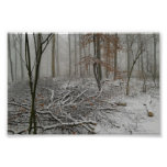 Snowy invierno Forest Posters