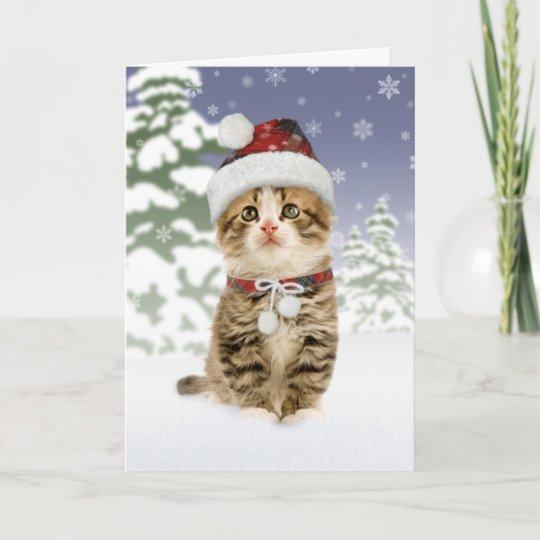 Kitten Christmas Cards.Snowy Kitten Christmas Cards