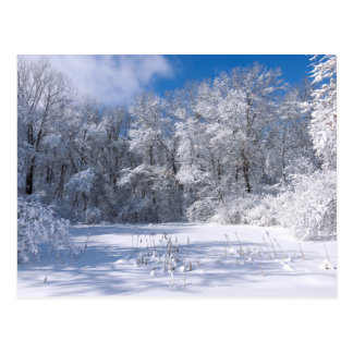 Snowy Marthaler Park and Trees Postcard