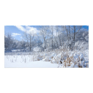 Snowy Marthaler Pond Trees and Reeds Card