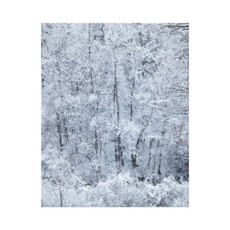 Snowy Mountain Forest Canvas Print