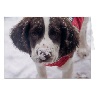 Snowy Nose Puppy Greeting Cards