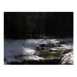 Snowy Oregon Forest, Fox Creek 12 Postcard
