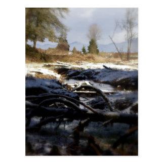 Snowy Oregon Forest, fox creek 6 Postcard
