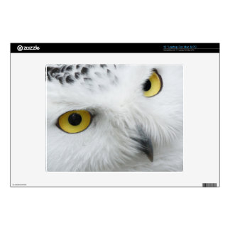 "Snowy Owl 12"" Laptop Decal"