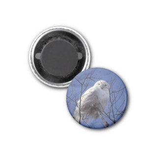 Snowy Owl 1 Inch Round Magnet