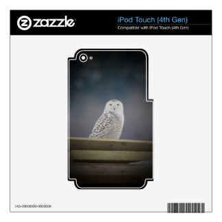 Snowy Owl_3308 Decal For iPod Touch 4G