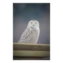 Snowy Owl_3308 Stationery