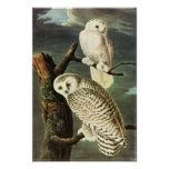 Snowy Owl Audubon Birds of America Fine Art Poster