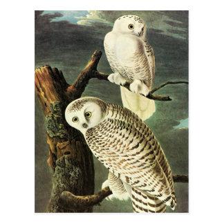Snowy Owl - Audubon Fine Vintage Birds America Postcard