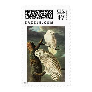 Snowy Owl - Audubon Fine Vintage Birds America Stamp