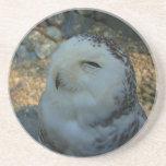 Snowy Owl Beverage Coaster