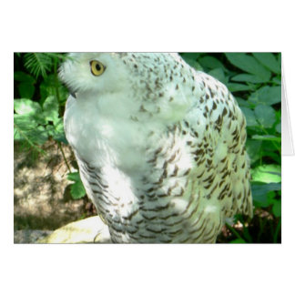 Snowy Owl Bird Card