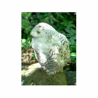 Snowy Owl Bird Cut Out