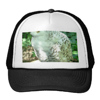 Snowy Owl Bird Hat