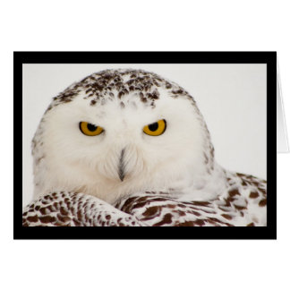 Snowy Owl Blank Greeting Card