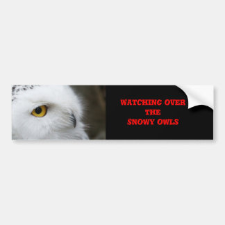 Snowy owl bumper sticker. bumper sticker