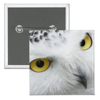 Snowy Owl 2 Inch Square Button