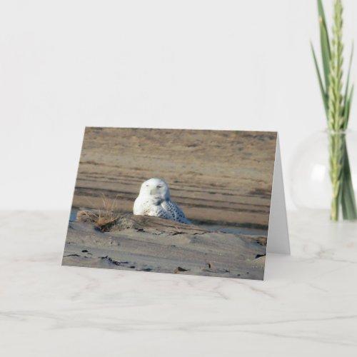 Snowy Owl Card card