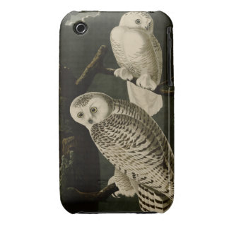 Snowy Owl iPhone 3 Case-Mate Cases