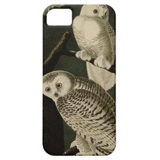 Snowy Owl iPhone 5 Cases