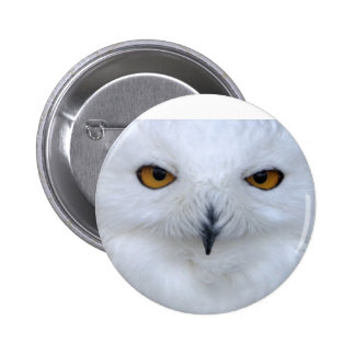Snowy owl close up button