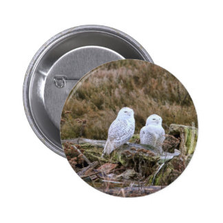 Snowy Owl Couple Pinback Buttons