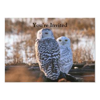 Snowy Owl Couple Card