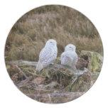 Snowy Owl Couple Dinner Plate