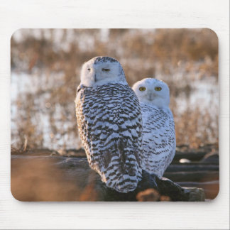 Snowy Owl Couple Mouse Pad