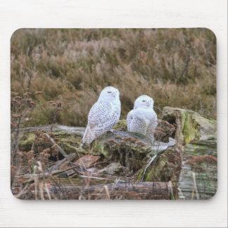 Snowy Owl Couple Mousepads