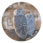 Snowy Owl Couple Party Plate