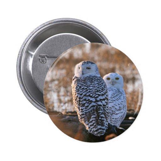 Snowy Owl Couple Pin