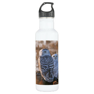 Snowy Owl Couple Stainless Steel Water Bottle