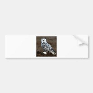 SNOWY OWL EYES BUMPER STICKER