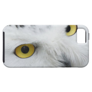 Snowy Owl Eyes iPhone 5 Cases