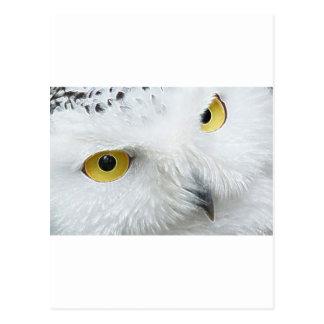 SNOWY OWL EYES POST CARDS