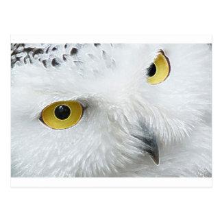 SNOWY OWL EYES POSTCARD