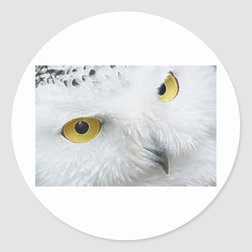 SNOWY OWL EYES STICKERS