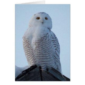 Snowy Owl folded card