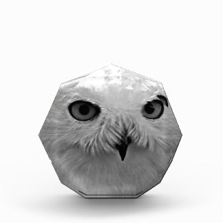 Snowy Owl Gift Collection Awards
