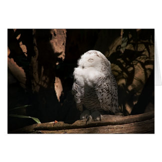 Snowy Owl • Greeting Card