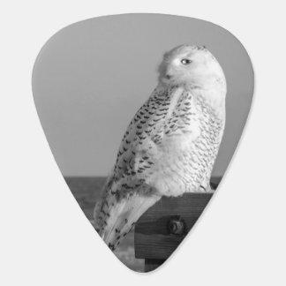 Snowy Owl Guitar Pick