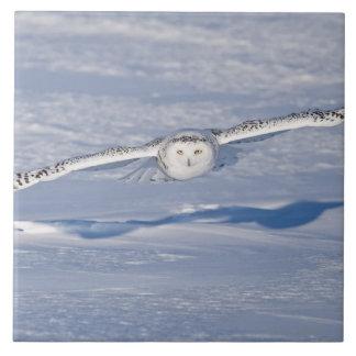 Snowy Owl in flight. 2 Ceramic Tile