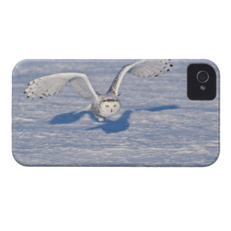 Snowy Owl in flight. iPhone 4 Cover