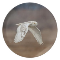 Snowy owl in flight melamine plate