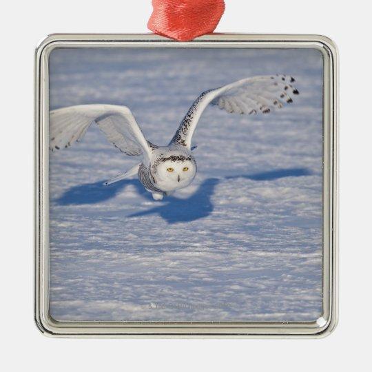 Snowy Owl in flight. Metal Ornament